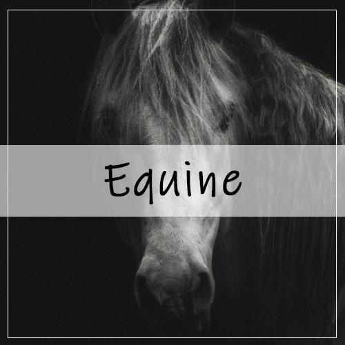 Equine Photography Portfolio