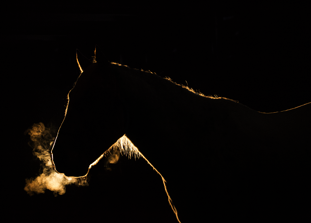 Winter Silhouette of Horse