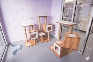 One of the play rooms for the cats with outs of cat towers and comfy places to nap!